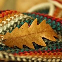 L'arbre &agrave dons : des vêtements chauds pour les sans-abris dunois